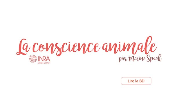Conscience animale