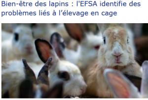 Bien-être des lapins l'EFSA identifie des problèmes liés à l'élevage en cage