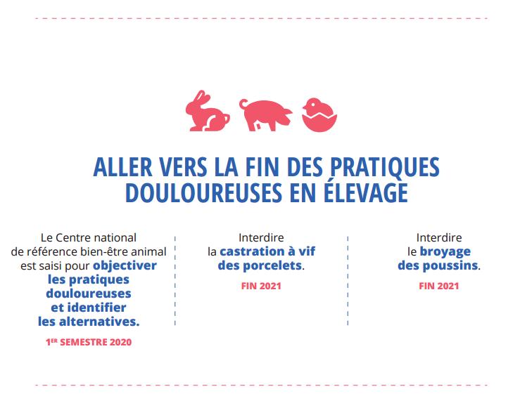 Saisie du CNR BEA par le MAA sur la fin des pratiques douloureuses en élevage_28 janvier 2020