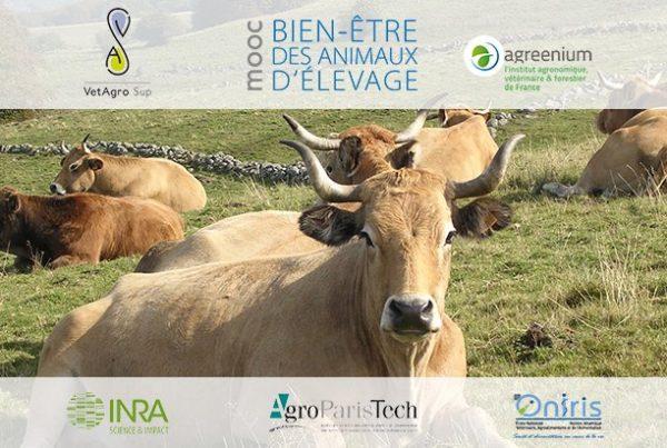 Image du MOOC Bien-être des animaux d'élevage